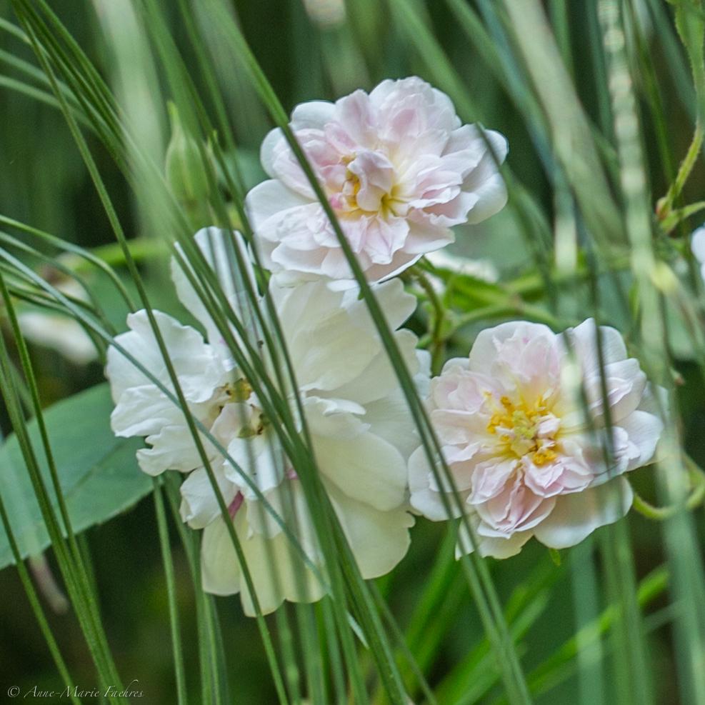 RBFAS voor ledenen niet leden bloemschikken 1