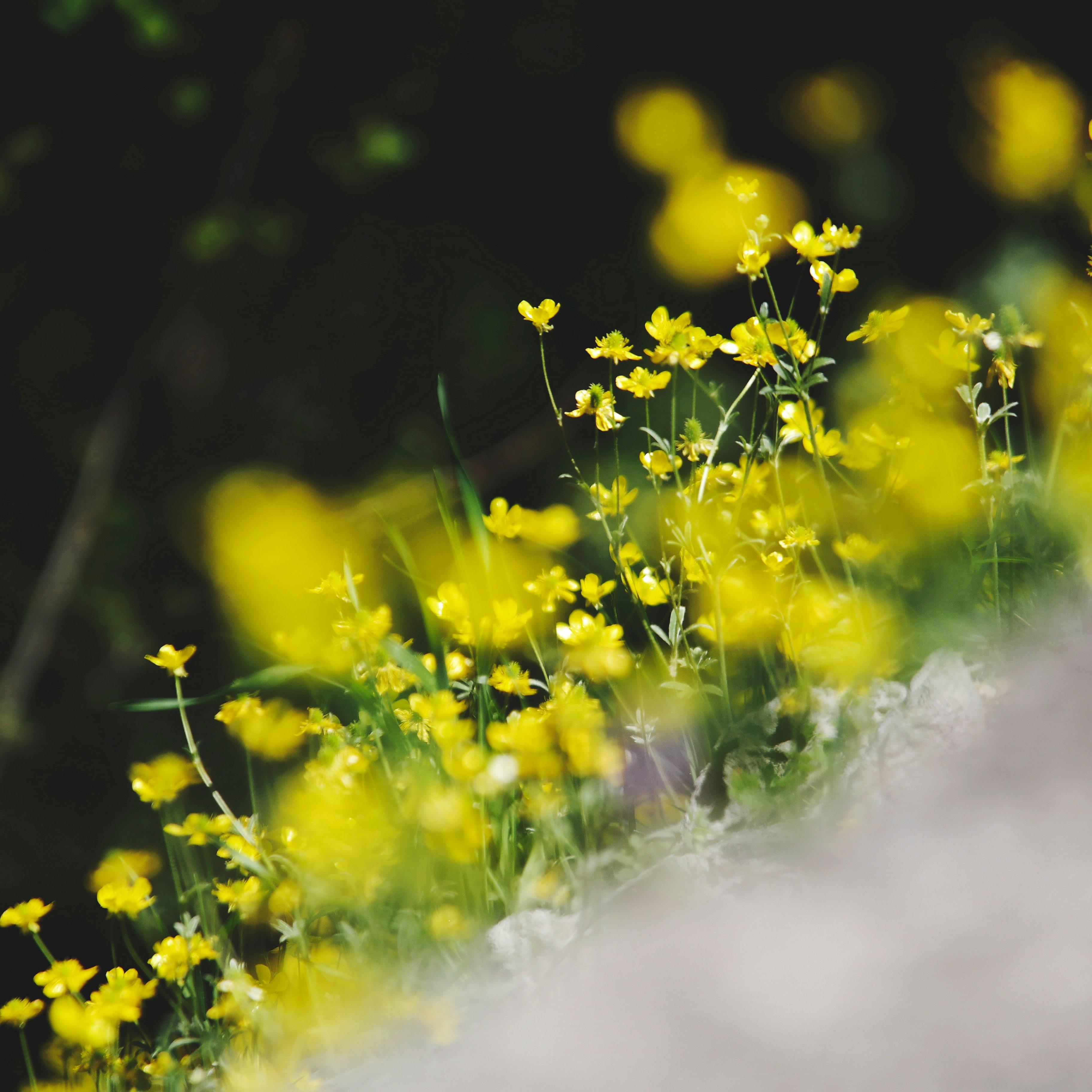 RBFAS voor ledenen niet leden bloemschikken 3