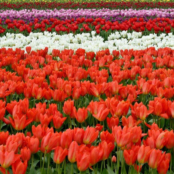 27 mei tot 1 juni: Reis naar Nederland