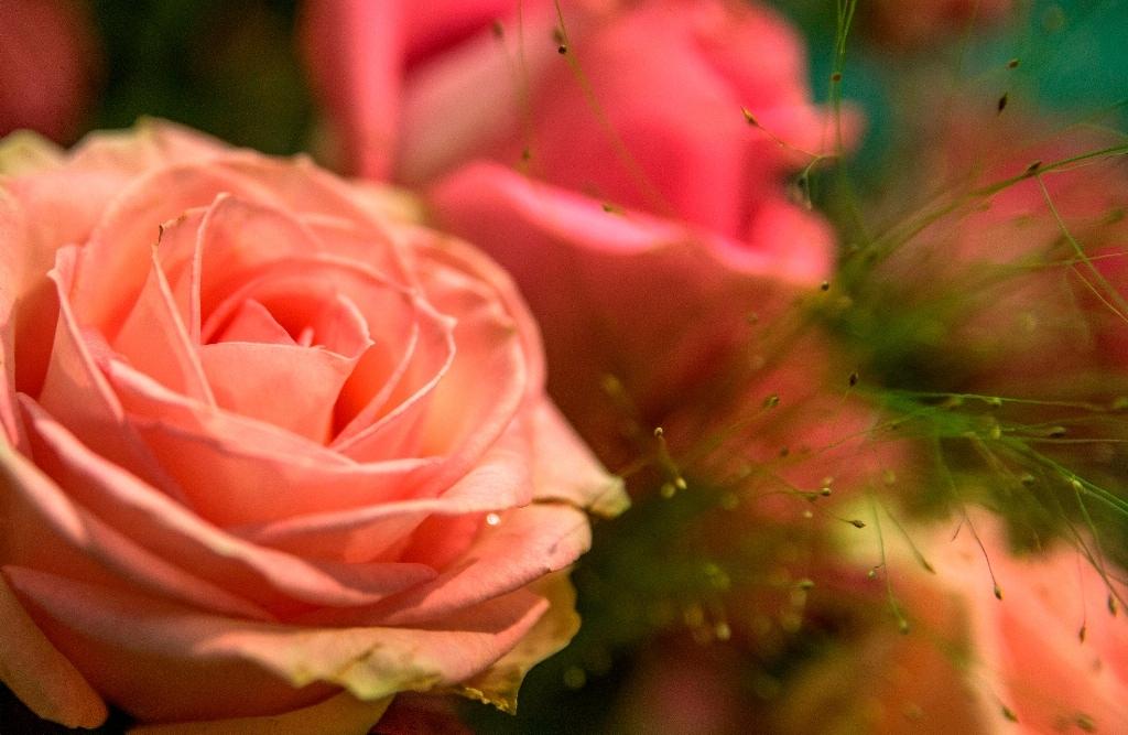 2012 RBAFS Royal Belgian Flower Arrangement Society