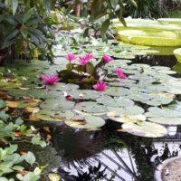 Jardin Botanique Meise – juin 2018
