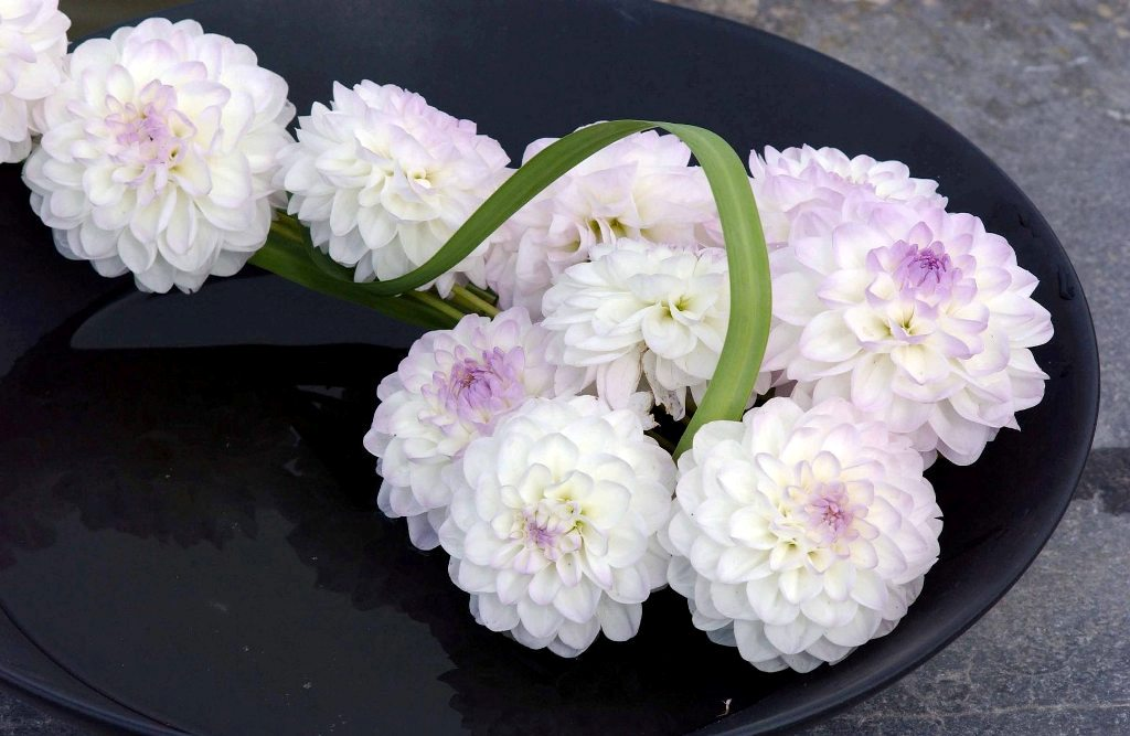 Agenda à l'étranger RBAFS Royal Belgian Flower Arrangement Society