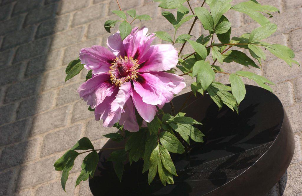 Reglement-van-inwendige-orde RBAFS Royal Belgian Flower Arrangement Society