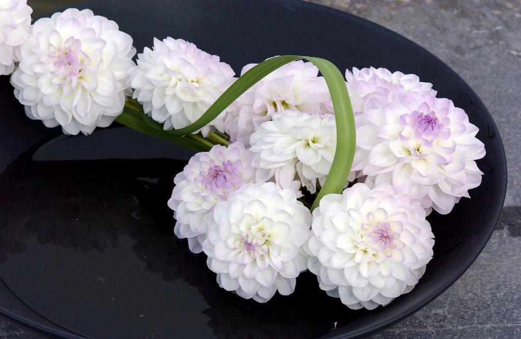 Workshop RBAFS Royal Belgian Flower Arrangement Society